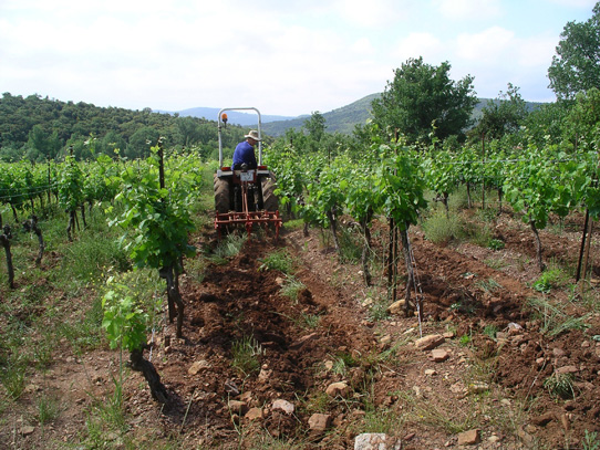 Ploughing the Syrah